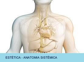 ESTETICA - Anatomia Sistemica - Sem 1
